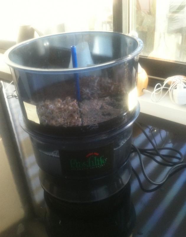 Le germoir au 3ème jour. Les graines ne poussent pas encore la grille.