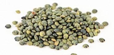 Graines germées lentille verte