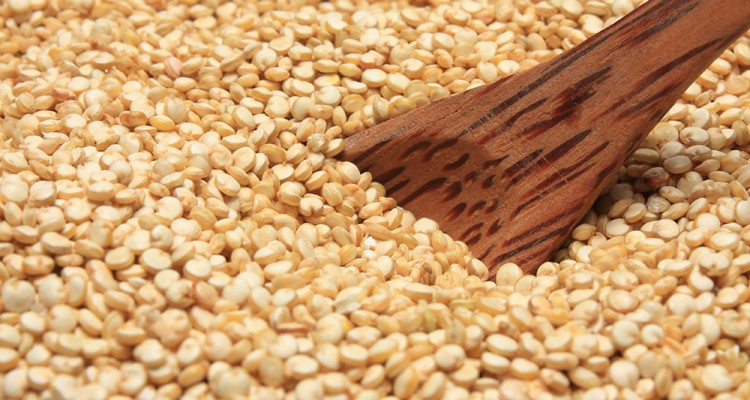 Graines germées de quinoa