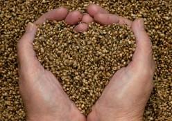 Graines germées coeur
