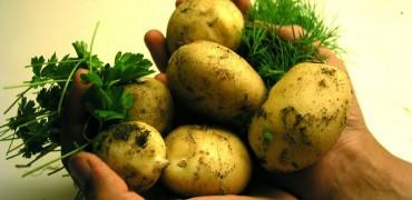 Purée de pommes de terre aux graines germées d'oignon