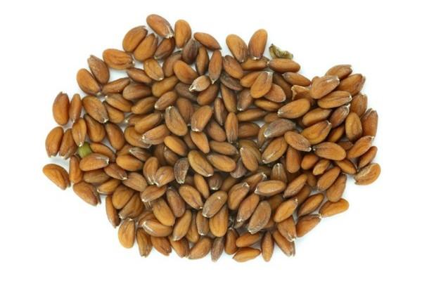 Graines germées de cresson