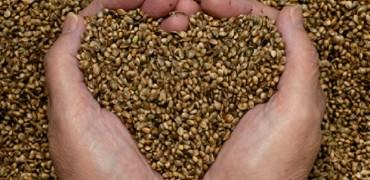 Les graines germées : bonnes et pratiques !
